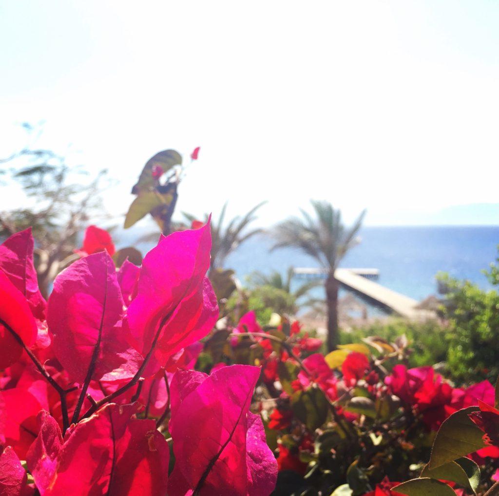 Red Sea Aqaba March